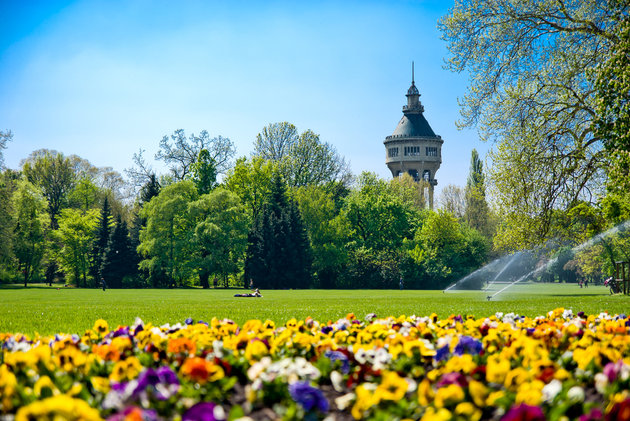 colourful flowers and green trees in a park on Margaret island, Budapest