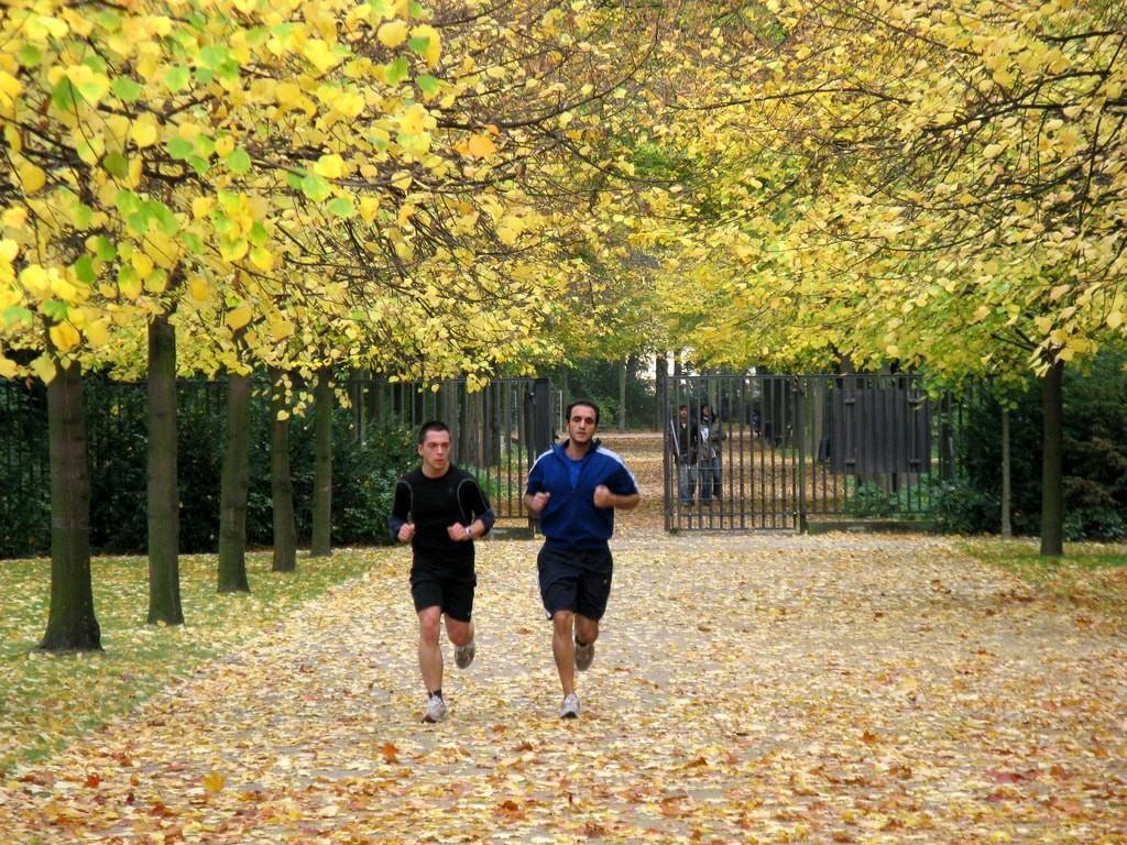 Jogging Tiergarten
