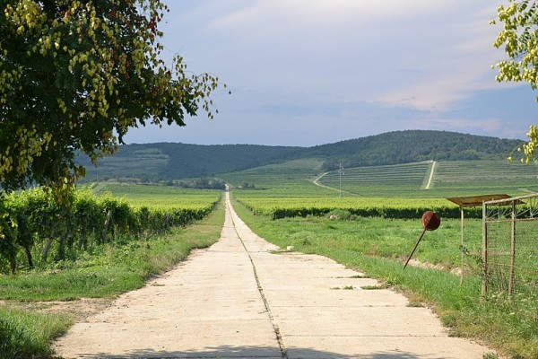 a scene from the Tokaj wine region and vineyards in Hungary