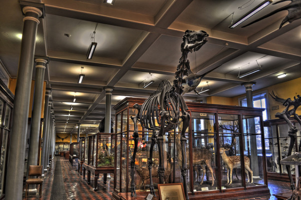 Interior of the NAtural History Museum, Dublin, Ireland, displaying the skeletons and taxidermy animals