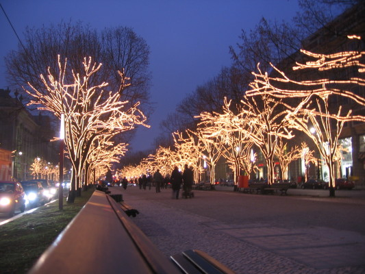 trees Illuminated with Christmas lights lining unterdenlinden in berlin, germany