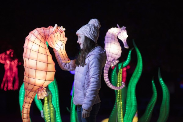 A young girl admires an illuminated sea-horse shaped light at Dublin zoo wildlights exhibit