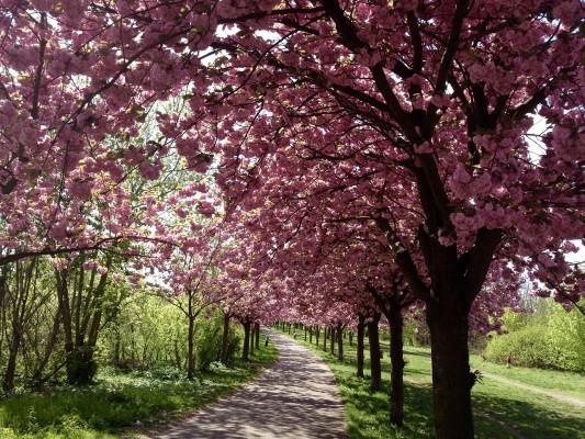 Berlin Mauerpark Spring