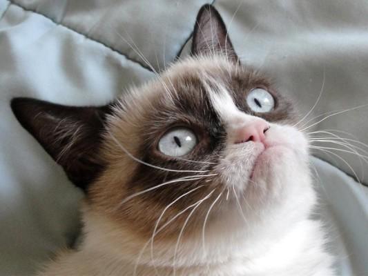 grumpy cat, aka tartar sauce, halloween costume idea