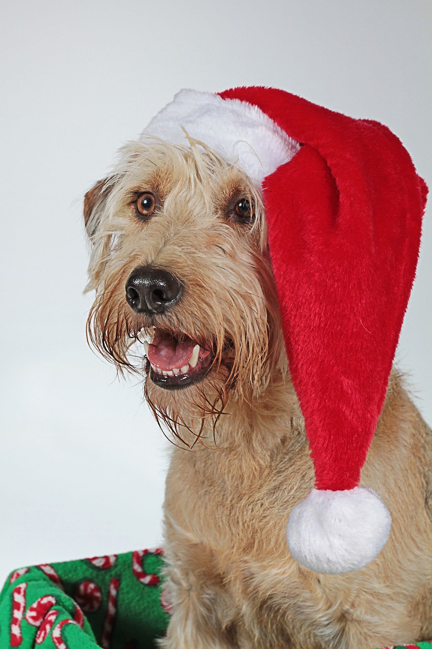 A dog with a santa hat on its head